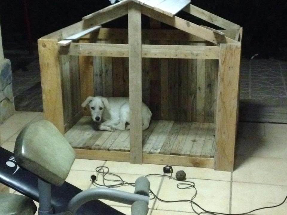 How to Build a Pallet Dog House DIY