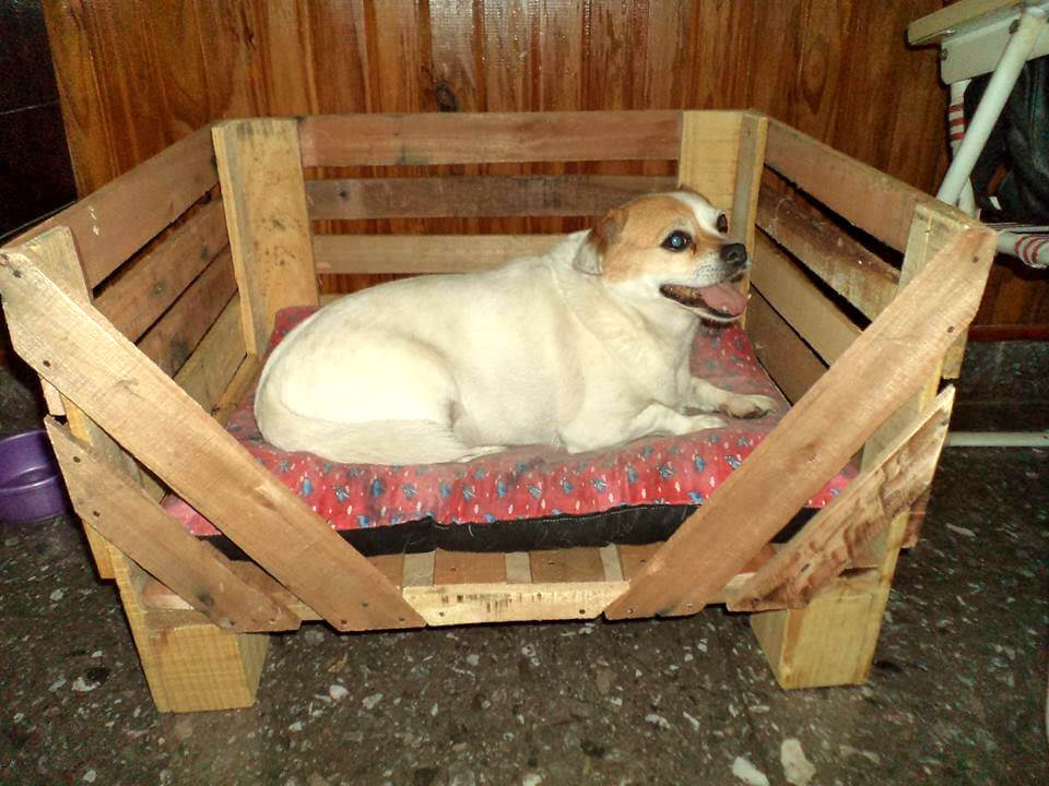 40 diy pallet dog bed ideas don 39 t know which i love more for Wood dog bed furniture