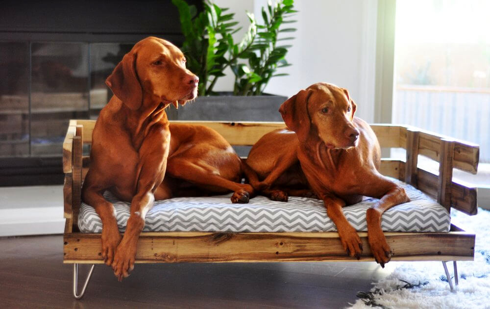 40 diy pallet dog bed ideas don 39 t know which i love more - Faire un lit avec des palettes ...