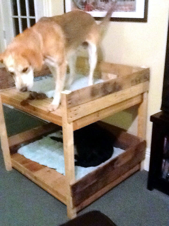 40 diy pallet dog bed ideas don 39 t know which i love more for Pet bunk bed gallery