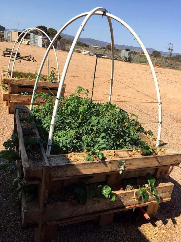 handmade pallet greenhouse