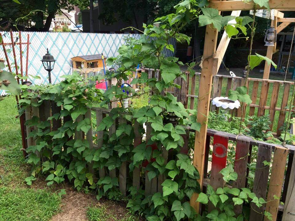 pallet garden with aloft lattice trellis frame